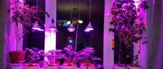 Лампочки для рассады